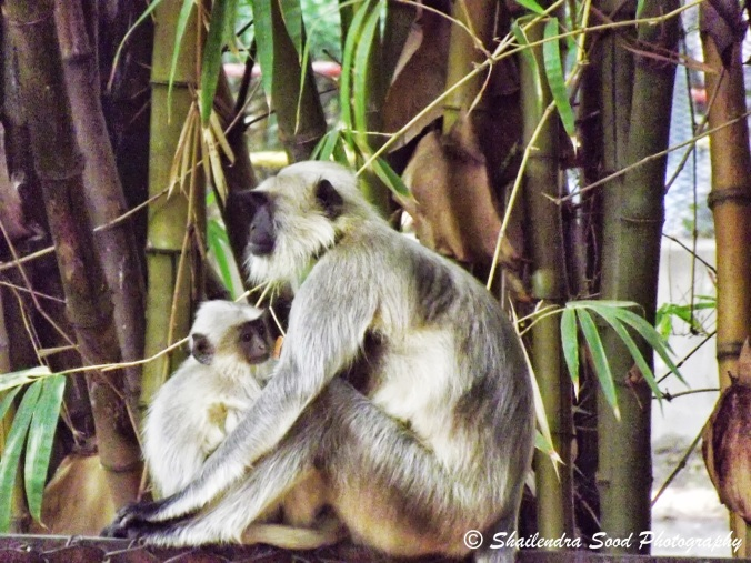 Monkeys and child