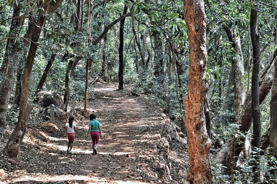 A walk into the woods of Matheran